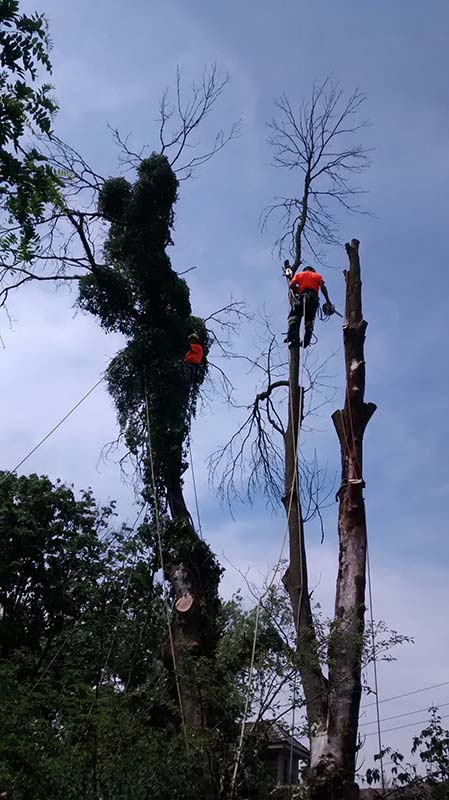 two climbers in trees